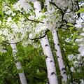 Photos: White & White 2