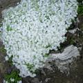 Photos: White & White 3