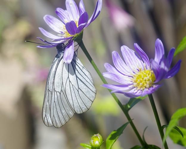 あの年の6月/花と蝶