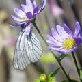 Photos: あの年の6月/花と蝶