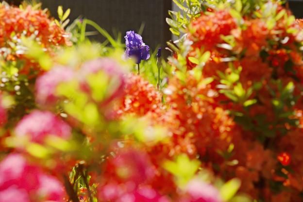 あの年の6月/カラフルな庭