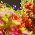Photos: あの年の6月/カラフルな庭