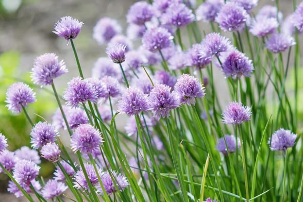 あの年の6月/あふれる Purpleee