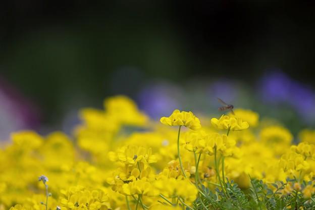 あふれる Yellow~