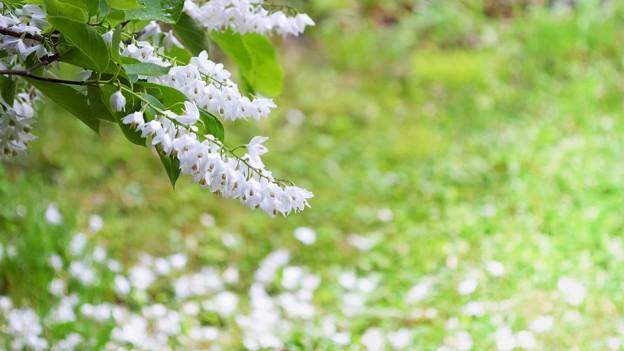 雨後の白雲[木]