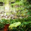Photos: mystic water gate