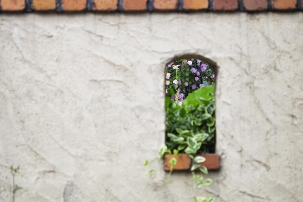 7月の庭/夏薔薇