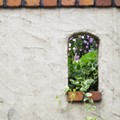 Photos: 7月の庭/夏薔薇