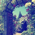 Photos: 「アリスの好きな庭」