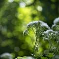 日曜の午後、賑やかしの森で...