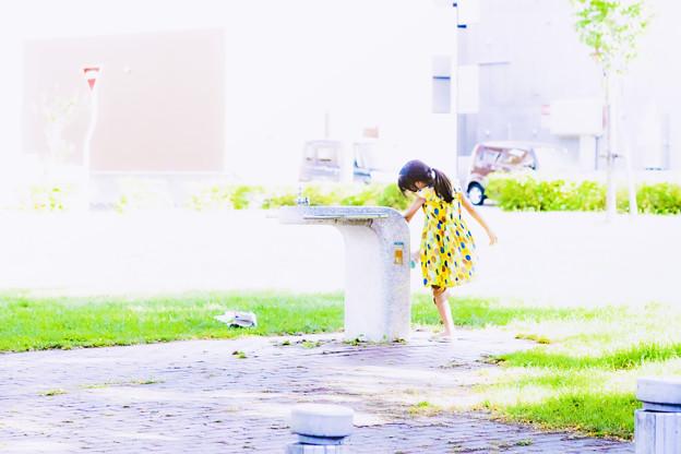 「ナツコの夏」