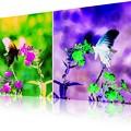 Photos: flower & butterfly