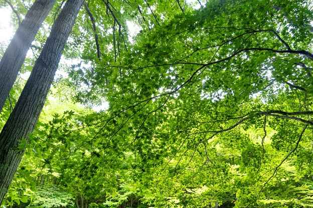 Photos: IN THE FOREST - green leaf