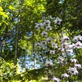 Photos: Chandelier of the forest