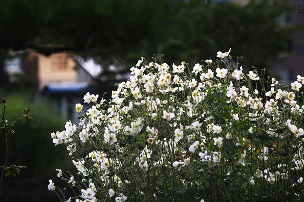 9月の庭/旬花
