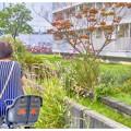 Photos: image 昭和/コスモス咲く花壇