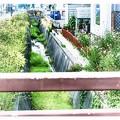 Photos: image 昭和/明渠を飾る