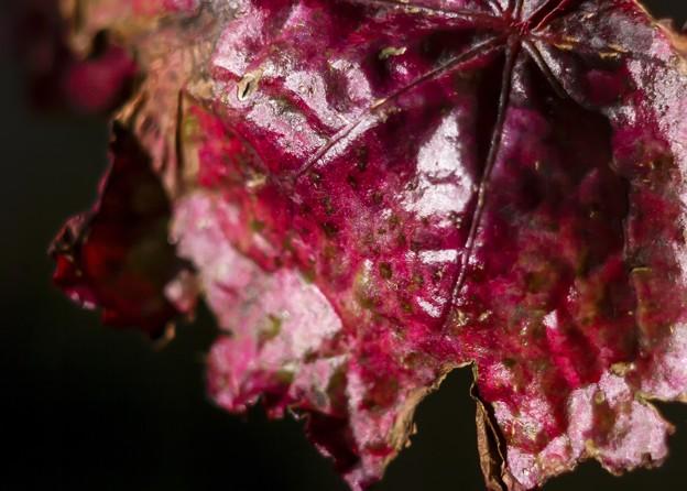 Autumn impression vol.2