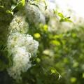 Photos: Green wall