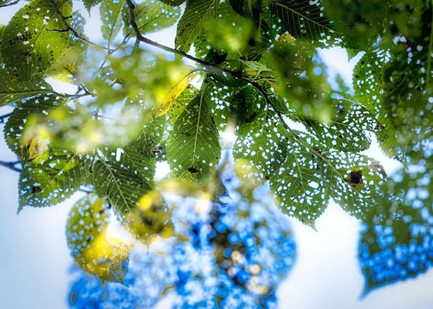 leaf beetles art work B