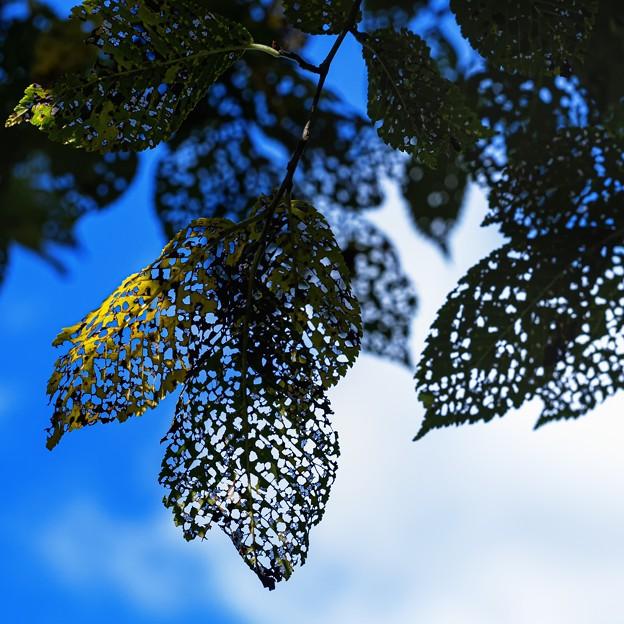 leaf beetles art work B+