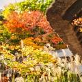 Photos: 軒下の秋