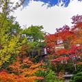 10月の庭/紅櫻館