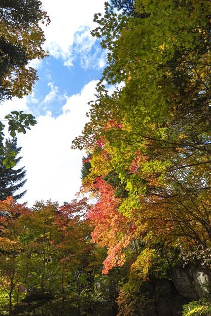 Photos: 立ち昇る秋
