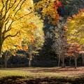Photos: Late autumn of the park/彩色/