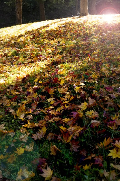 Late autumn of the park/落葉/