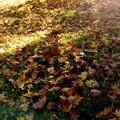 Photos: Late autumn of the park/落葉/