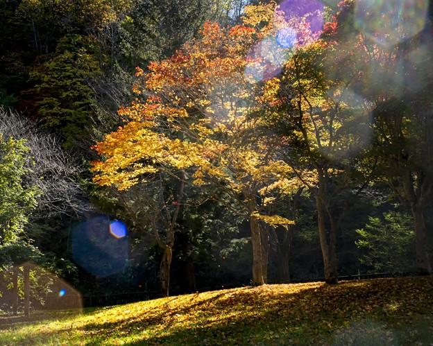 Late autumn of the park/逆光/