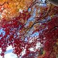 「木々奇々怪々」
