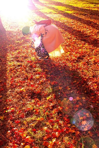 秋を手挟む
