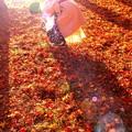 Photos: 秋を手挟む
