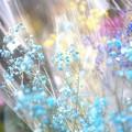 Photos: 「350円の幸せ」