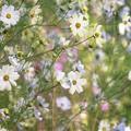 Photos: 「直立数多花」