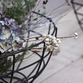 Photos: Wire basket