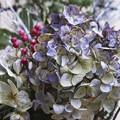 Photos: Time fixation - hydrangea