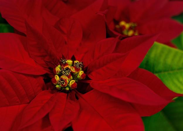 Photos: Christmas flower