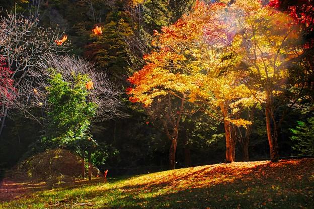 Golden light fall