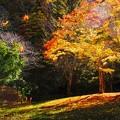 Photos: Golden light fall