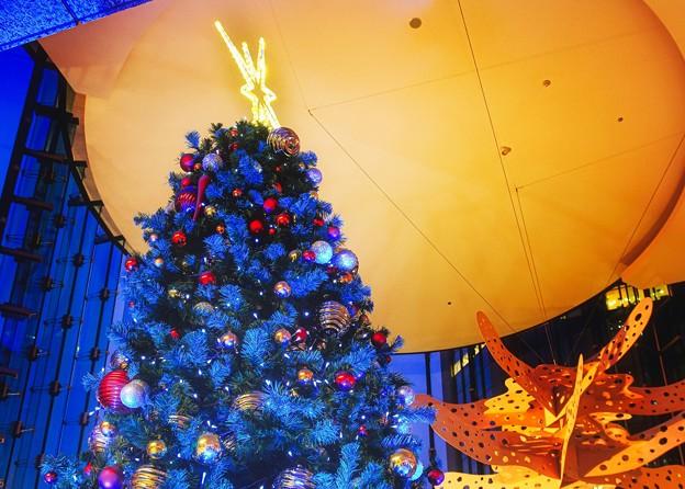 Photos: Blue Christmas tree
