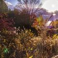 フェンスの向こうの秋模様