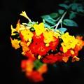 image...hard mix