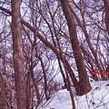 Photos: 円山原始林