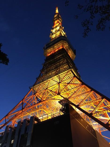 Photos: 冬の東京タワー