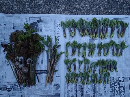 2014/04/18の収穫