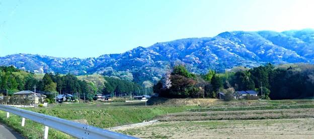 山桜の山並み