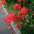 写真: 道端に咲く